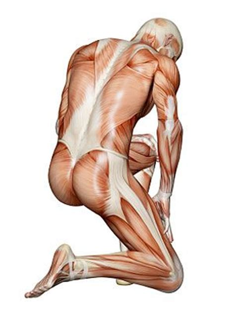 This 6th edition of anatomy: The Body's Bones and Muscles - Healthy Living Center - Everyday Health