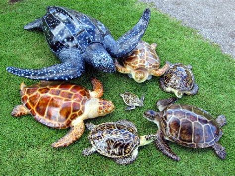 Why Do Sea Turtles Cry When They Lay Their