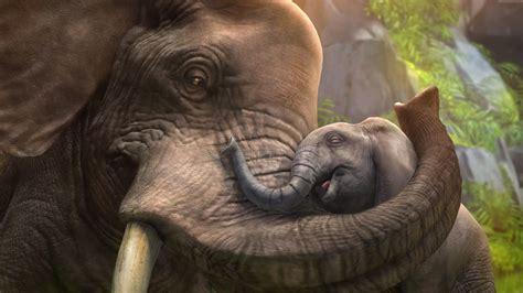 The Elephant Love Animal Hd Wallpaper Wallpaper
