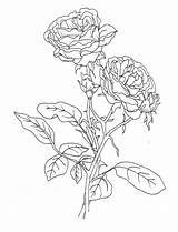 Compass Coloring Rose Sheet Getcolorings Getdrawings Printable sketch template