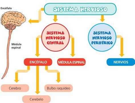 abc color py sistema nervioso edicion impresa abc color