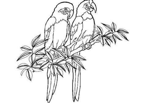ausmalbilder fuer kinder papagei