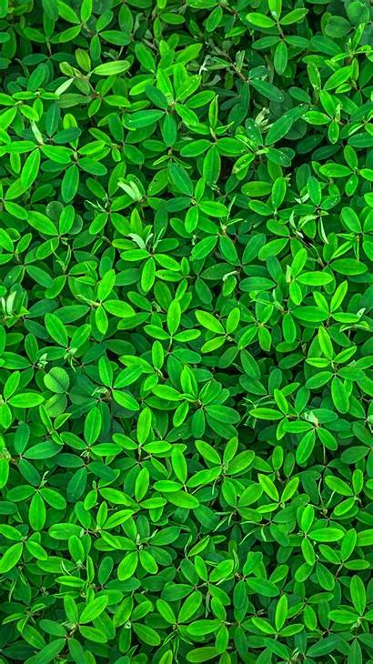 Iphone Spring Wallpapers Backgrounds Summer 6s Leaf