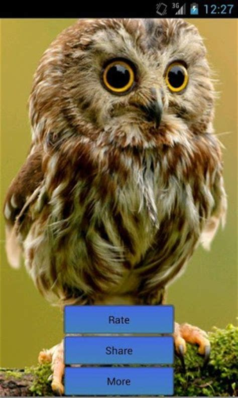 owl sound bird sounds app for android
