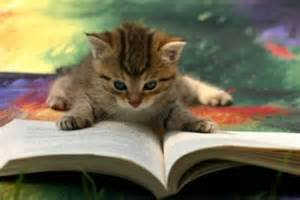 cat book cat book free images at clker vector clip