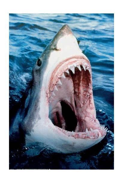 Shark Week Awesome Gifs Teeth Human Sharks