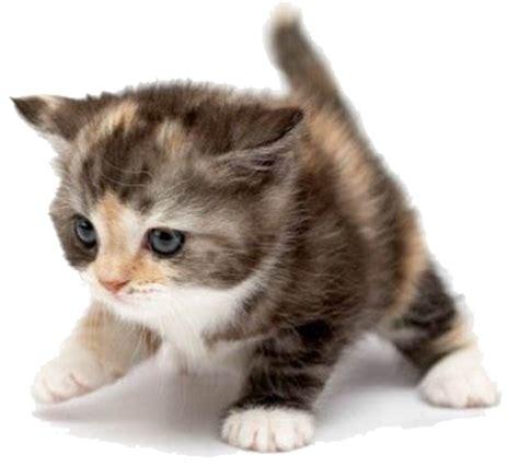 Cute Cat  Free Images At Clkercom  Vector Clip Art