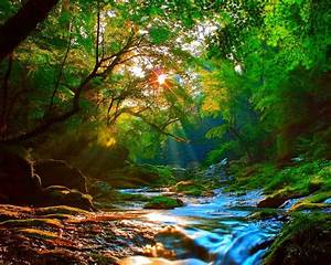 Sunrise, Beautiful, Mountainous, River, Forest, With, Green