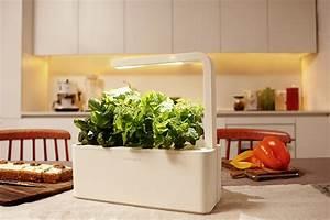 Gadget des tages das krautergarten set click grow for Kr utergarten küche