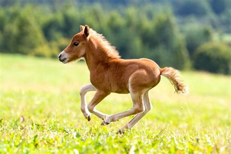 horses wild america horse cute baby nature foal colt adorable pony cutest running babies evolved extinct species been animals fella