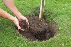 Wann Johannisbeeren Pflanzen : kirschlorbeer pflanzen diesen abstand sollten sie einhalten ~ Orissabook.com Haus und Dekorationen