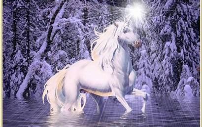 Magical Creatures Unicorn Unicorns Fairy Fairies Desktop