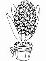 Hyacinth Coloring Pages Flower Flowers Printable sketch template