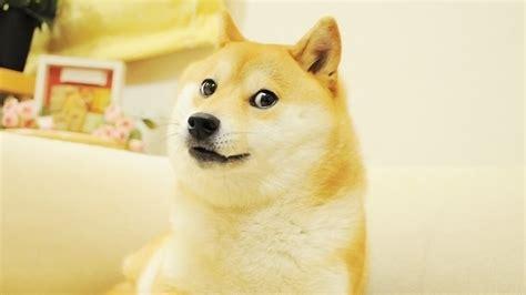 dogecoin    popular