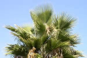 Welche Erde Für Palmen : video welche palme habe ich die beliebtesten palmenarten im berblick ~ Watch28wear.com Haus und Dekorationen
