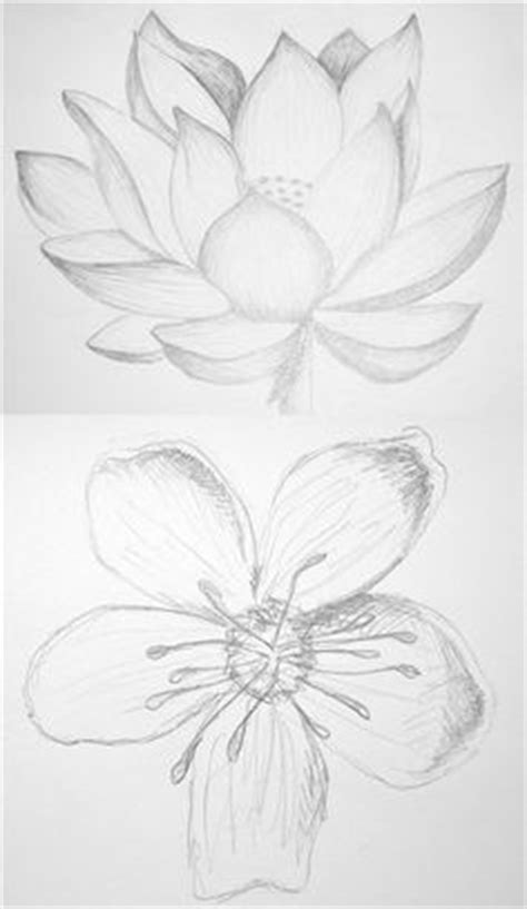 How to draw a water lily and pad   Step by step Drawing tutorials   Lilies drawing, Flower