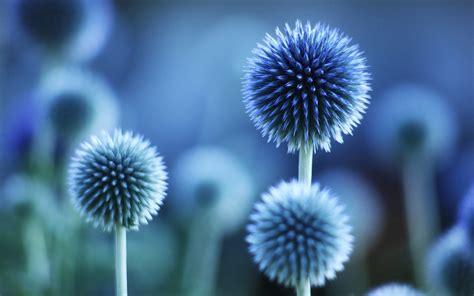 Blume Pflanze Blau Stimmung 1920x1200 Hd Hintergrundbilder