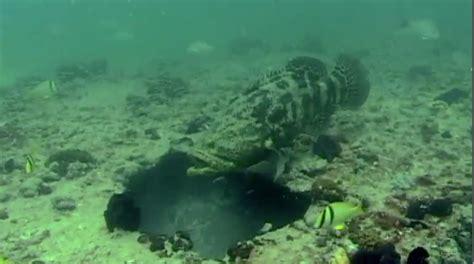 grouper goliath cast fly spanish jewfish spanishflytv