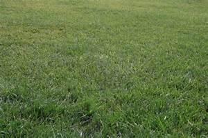 Semer Gazon Periode : comment faire sa pelouse ~ Melissatoandfro.com Idées de Décoration
