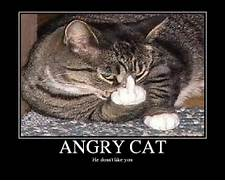 ANGRY CAT - Picture   ...