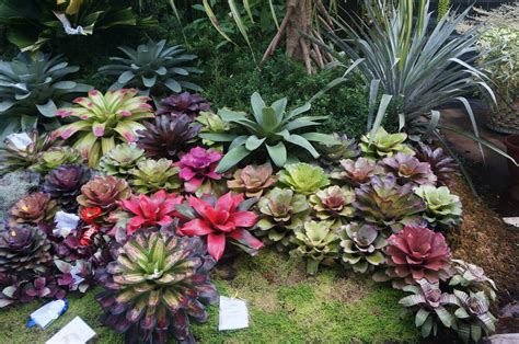 Have a look at the unusual plant combinations and grab ideas for cheap recycled planters. Display garden at Kadayawan Festival, Philippines ...