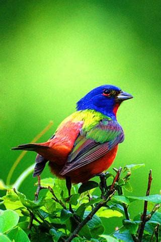 3d Birds Wallpapers by 3d Birds Android Informer A High Quality 3d Birds Live