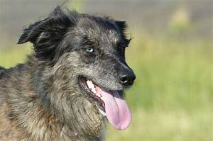 cataracts in dogs pet symptoms