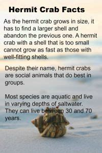 house for hermit crab k 1 math and literacy pack eric carle 594 | fc3bf98f95340e6260f6582234c0fe9a hermit crab habitat ideas class pet