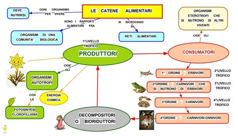 scienza e tecnologia alimentare mappa concettuale catene alimentari scuolissima
