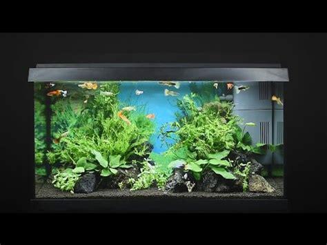 fische für 60 liter aquarium juwel aquarium primo 60 60l einrichtungsbeispiel tutorial