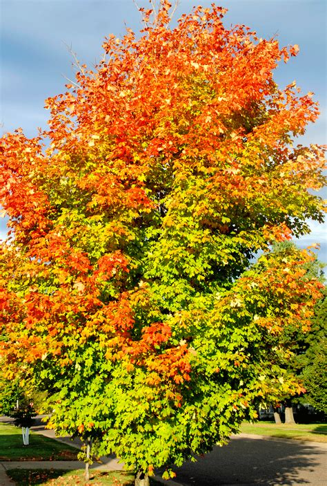 why do leaves change color in fall why do leaves change color in the fall news presspubs