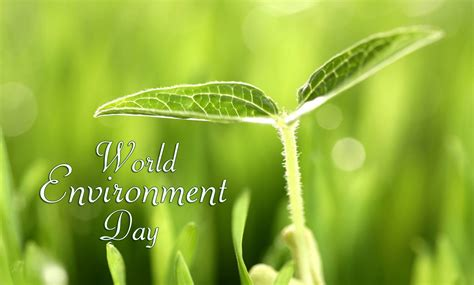 world environment day  world environment  site