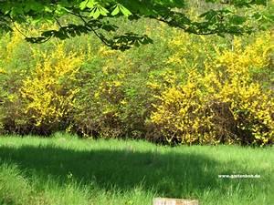 Wann Blüht Flieder : fotos vom wald im fr hling der gartenratgeber ~ Lizthompson.info Haus und Dekorationen