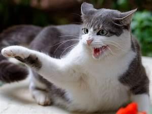Wie Fange Ich Eine Katze : wie kann man eine aggressive katze beruhigen ~ Markanthonyermac.com Haus und Dekorationen