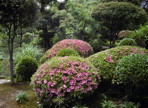 bush in japanese japanese gardens elements shrubs