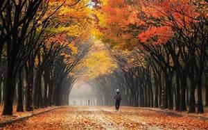 nature, Landscape, Colorful, Leaves, Street, South Korea ...
