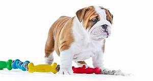 Dog toys for aggressive chewers wow blog for Best plush dog toys for aggressive chewers