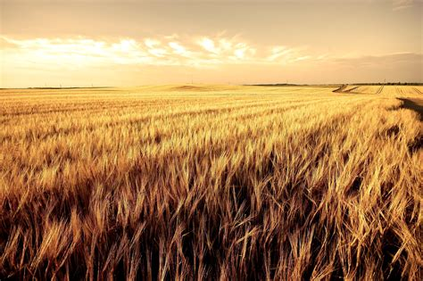 Todd Burrier- The Harvest is Plentiful | Todd Burrier