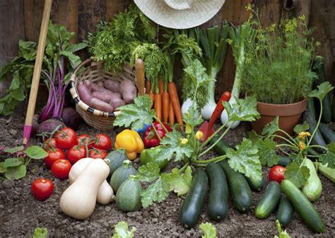 10 Best Plants To Grow In Your Vegetable Garden  Home N