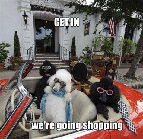 Shopping Memes - funny jokes shopping