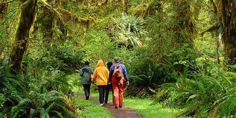 Hiking | Olympic National Park & Forest | Olympic Peninsula WA