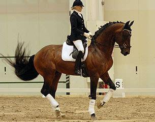 bitless competition   helsinki horse fair huge success