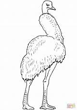 Coloring Emu Bird Largest Australia Drawing Printable Puzzle sketch template
