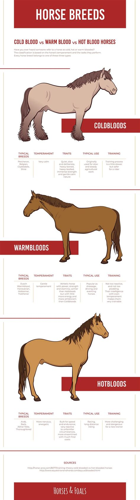 horse blooded cold horses warm mean does classification breeds blood breed refers someone difference draft every gemerkt care