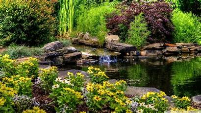 Pond Flowers Wallpapers Desktop Background 1080 Nature