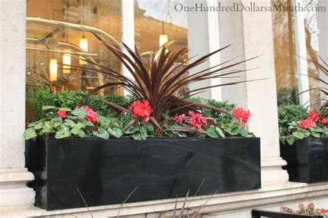 window box ideas  late winter  early spring