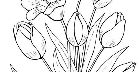 gambar mewarnai bunga tulip terbaru gambarcoloring