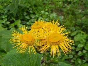 Pflanzen Im Mai : unbekannte pflanze hat gelbe bl ten und ist ca 60 cm hoch mein sch ner garten forum ~ Buech-reservation.com Haus und Dekorationen