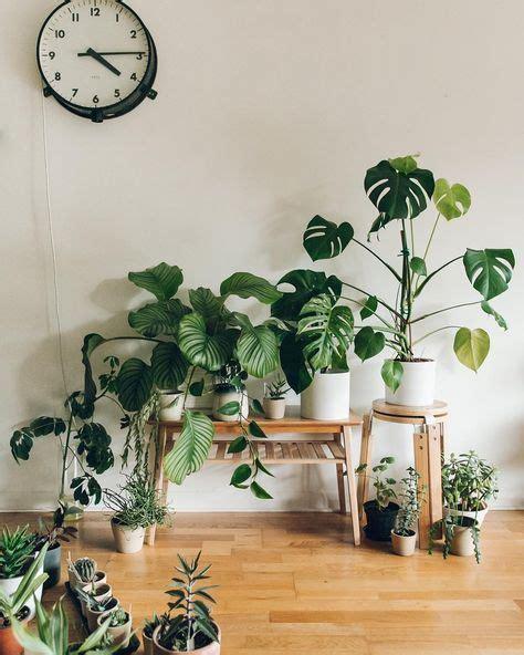 urban jungle plants plant styling indoor plants plants