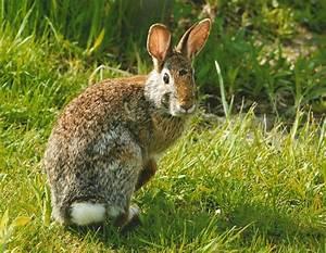 The rabbit the wildlife for Rabbit